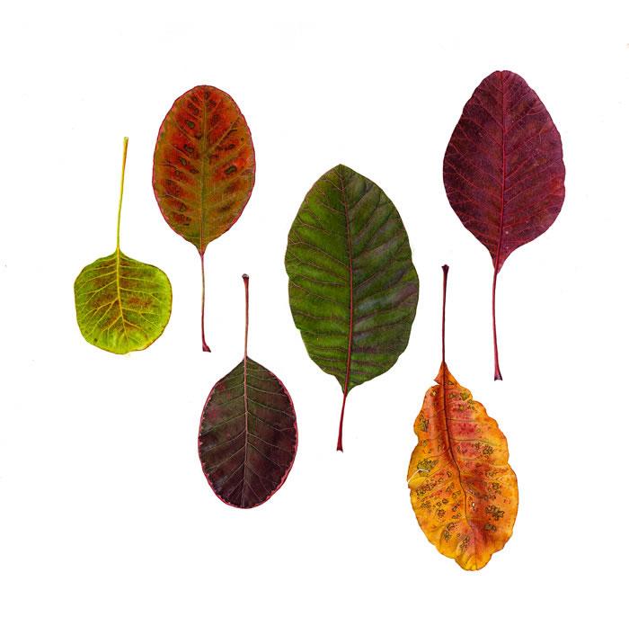 Carolyn Jenkins Assorted Leaves