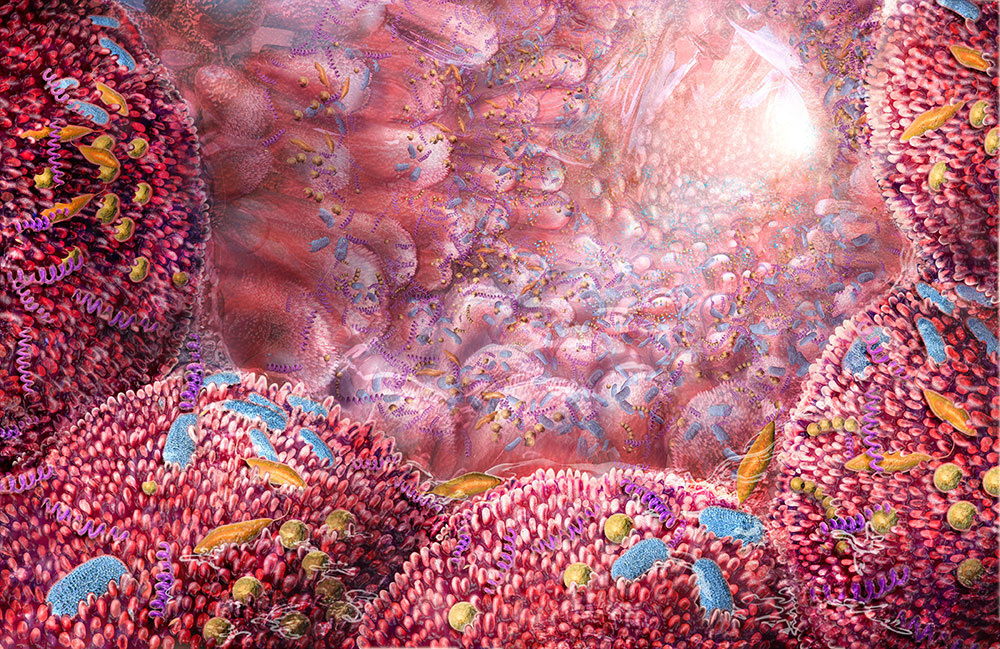 An artistic look deep within our intestine where a thriving ecosystem of microbes lives. Contrary to what one might think, these microbes are beneficial to us and help us digest our food. Otherwise, many nutrients would be indigestible. Subjects: biology, molecular, cells, bacteria, pharmaceutical