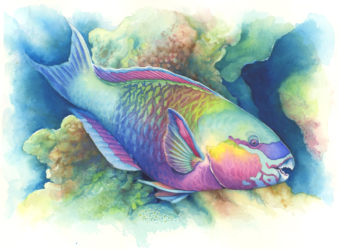 Maury aaseng the art of painting sea life in watercolor for Sea life paintings artists