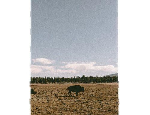 Bison . . . . #bison #arizona #buffalo #nature #wildlife…