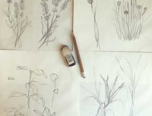 Sketching plants for a new assignment on Earth Day!…