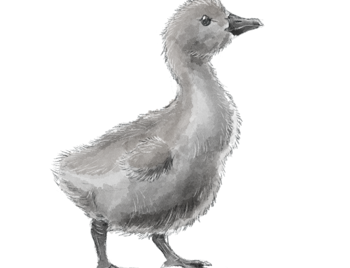 dianeramic: More work for the bird-themed rpg I'm working on!